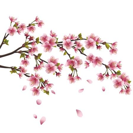Realista flor de sakura - cerezo japonés con pétalos volando aisladas sobre fondo blanco Ilustración de vector