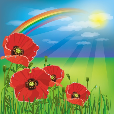 Nature background, summer landscape after rain with flower red poppies and rainbow Vector