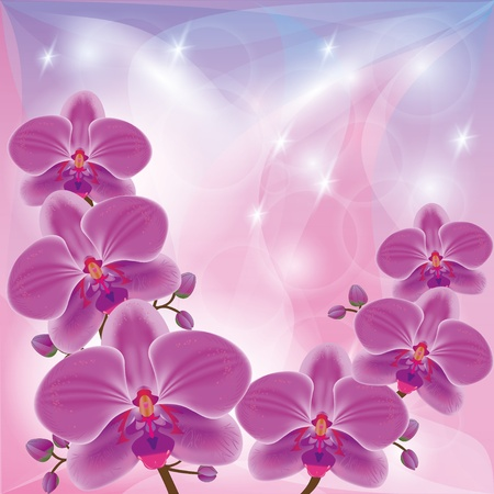 Floral glowing background with exotic flowers orchids, decorated stars and circles Vector