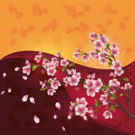 cherry tree: Sakura blossom - Japanese cherry tree on bright colorful background, vector