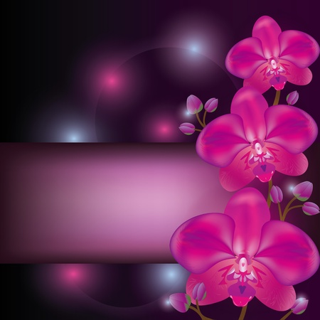 fita: Exotic flower purple orchid background, greeting or invitation card