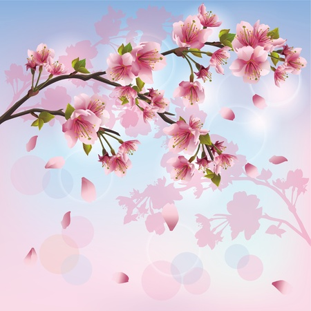 Sakura blossom - Japanese cherry tree background, greeting or invitation card Stock Vector - 12482367