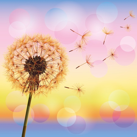 Flower dandelion on background of sunset, vector illustration  Place for text Ilustração