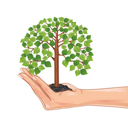 Hand holding a green tree, isolated on white background, element eco design  Vector