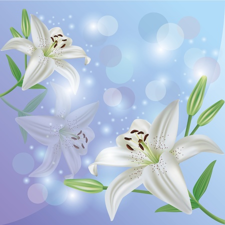 White lily flower background, greeting or invitation card Vector