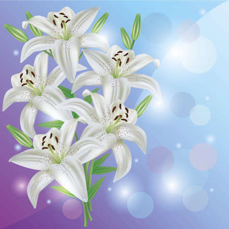 Greeting or invitation card with white lily flower  Light floral background, vector Vector