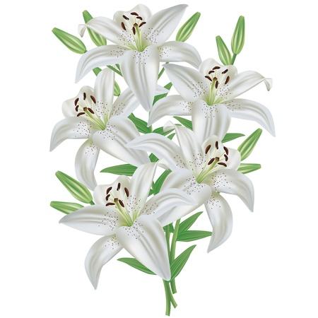 Giglio bianco bouquet di fiori realistica, isolato su sfondo bianco, vettore