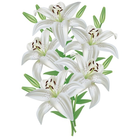 White lily flower bouquet realistic, isolated on white background, vector Vector