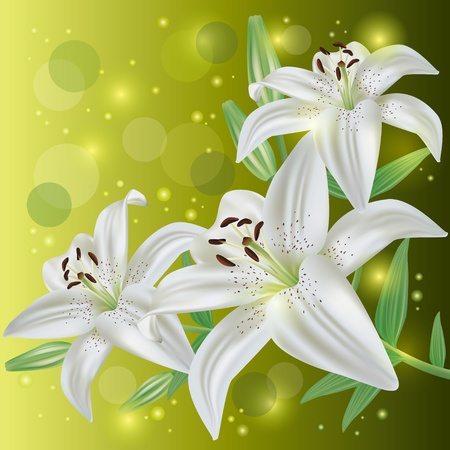 day lily: White lily flowers background, greeting or invitation card, vector illustration