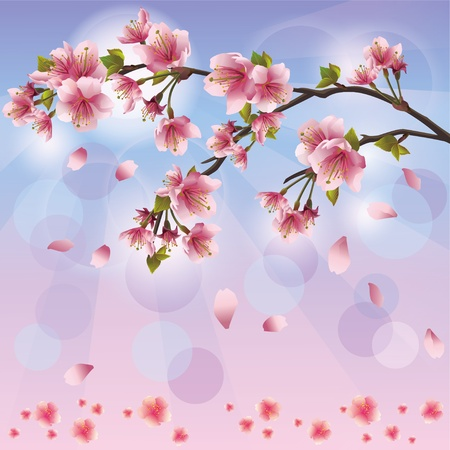 flor de sakura: Primavera de fondo con flor de sakura - Tarjeta de cerezo japonés árbol, saludo o invitación Vectores