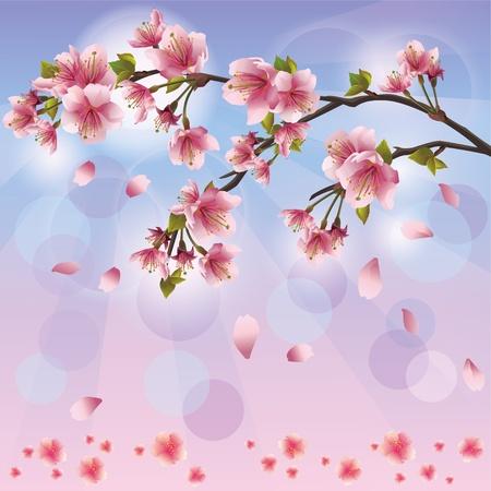 Frühling Hintergrund mit sakura blossom - japanischer Kirschbaum-, Gruß-oder Einladungskarte