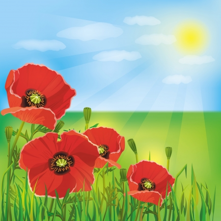 Nature background with flowers red poppies  Summer landscape Vector