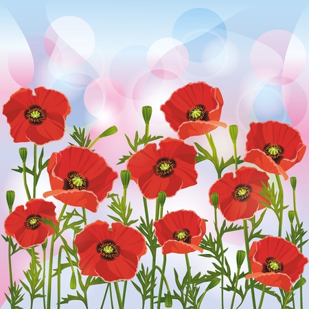 Flowers red poppies, floral background, greeting or invitation card Vector