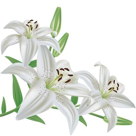 白いユリの花の花束、現実的な白い背景で隔離されたベクトルします。