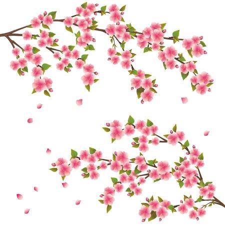 Realistische sakura blossom - japanischer Kirschbaum mit fliegenden Blüten auf weißem Hintergrund
