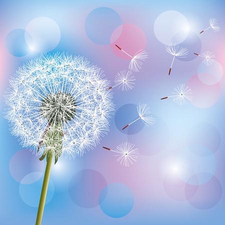 Flower dandelion on light blue - pink background, vector illustration  Place for text Vector