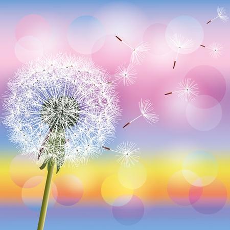 Flower dandelion on background of sunset, vector illustration. Spring nature background. Place for text Vector