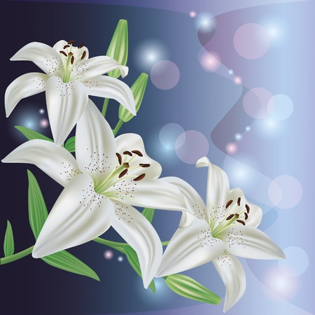 Greeting or invitation card with white lily flower.Glowing floral background, vector Vector