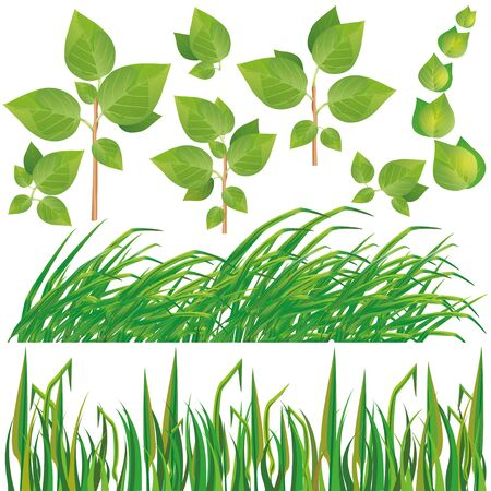 Set of fresh green leaves and grass isolated on white background, vector illustration Vector