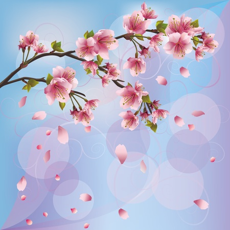 japanese garden: Sakura blossom - Japanese cherry tree background, greeting or invitation card Illustration