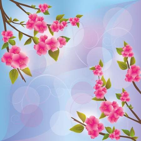 Sakura blossom - Japanese cherry tree background, greeting or invitation card Stock Vector - 13299235