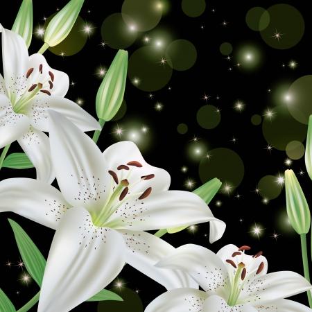 lily flower: Witte lelie bloem achtergrond, groet of uitnodiging kaart Stock Illustratie