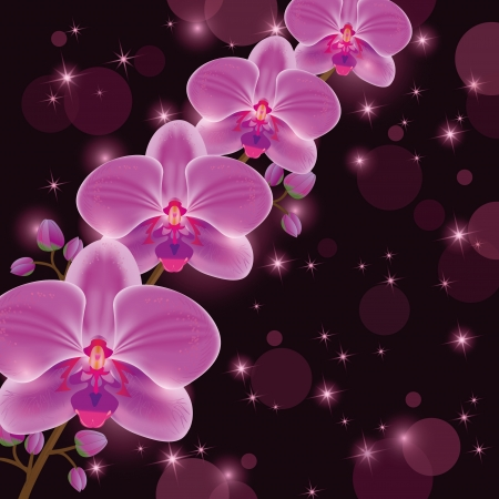 Greeting or invitation card with exotic flower purple orchid, dark luxury floral background, decorated stars and circle.   Vector