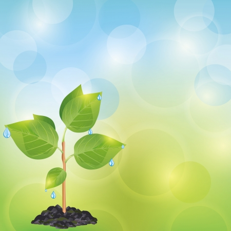agriculture wallpaper: Light eco background blue - green with fresh plant and water drops, place for text