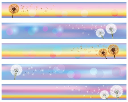 Set of horizontal floral banners with flower dandelion dandelion on background of sunset, vector illustration. Place for text Vector