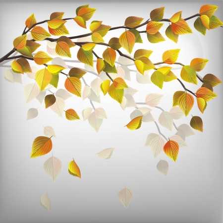 Autumn tree with flying leaves, beautiful nature background Stock Vector - 14264557