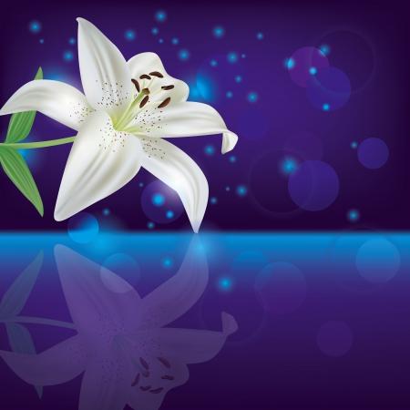 lily flower: Bright paarse achtergrond met witte lelie bloem, uitnodiging of wenskaart