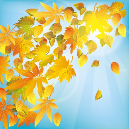 Autumn flying leaves, beautiful nature background, place for text Vector