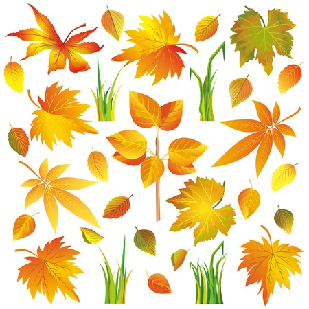 Set of different colorful autumn leaves and grass isolated on white background, vector illustration Vector