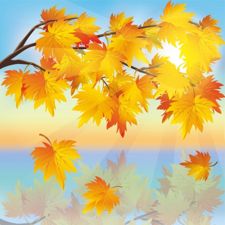 Autumn tree maple with leaf fall on background of sunset, beautiful nature landscape. Vector