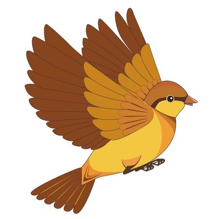 fly up: Flying bird cartoon isolated on white background. Vector illustration