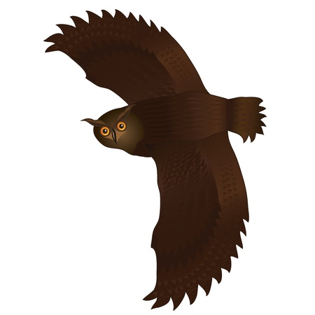 Flying owl cartoon isolated on white background. Vector