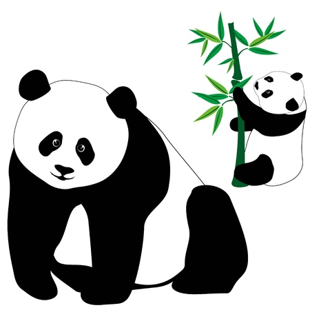 Set of cute panda bears with bamboo, isolated on white background.  Vector