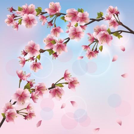 ramo di ciliegio: Sfondo chiaro con sakura fiore - giapponese carta di albero ciliegio, auguri o invito. Illustrazione vettoriale