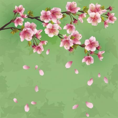 グランジ日本日本桜挨拶または招待カード ベクトル イラスト - 桜の花と緑を背景します。