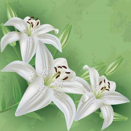 lirio blanco: Floral de fondo vendimia verde con flor blanca Invitación lirio o ilustración vectorial tarjeta de felicitación