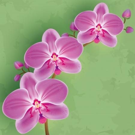 Floral sfondo verde vintage con fiori di orchidea viola Invito o illustrazione vettoriale della carta d'auguri