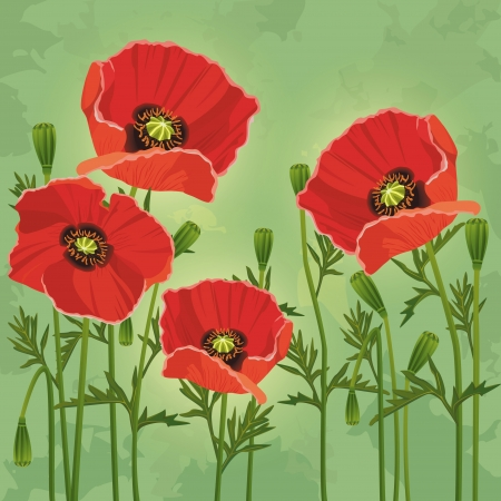 Floral vintage background green with red flowers poppies  Invitation or greeting card   Vector