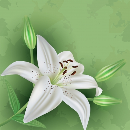 Vintage floral green background with white flower lily  Invitation or greeting card  Vector illustration Vector