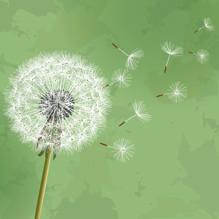 dandelion flower: Vintage floral green background with flower dandelion  Invitation or greeting card  Illustration