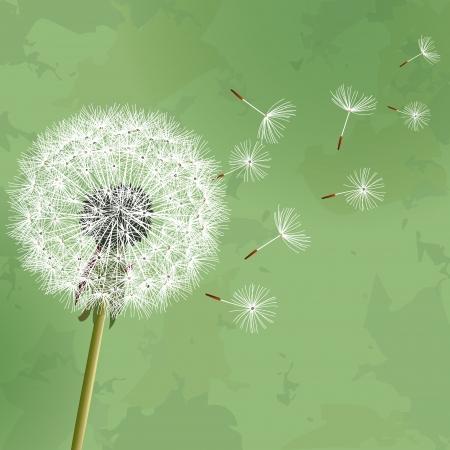 paisaje vintage: Vintage fondo floral verde con el diente de le�n flor. Invitaci�n o tarjeta de felicitaci�n. Ilustraci�n vectorial