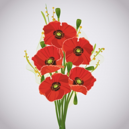poppy flower: Beautiful celebratory bouquet of red poppies for greeting or invitation card isolated on gray background  Illustration