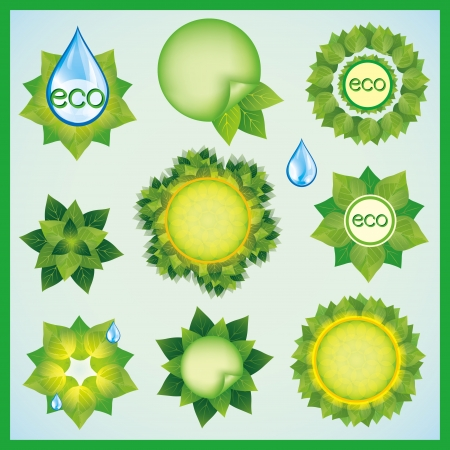 Set of fresh green leaves and water drops , isolated on white background  Eco design decorative elements  Vector