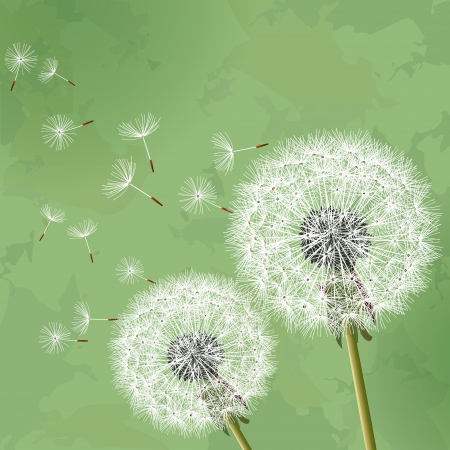 Floral vintage background green with two flowers dandelions Vector illustration