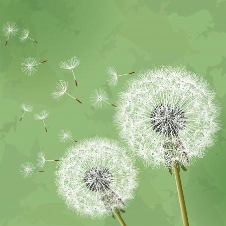 2 つの花タンポポ ベクトル イラストと緑の花のビンテージ背景