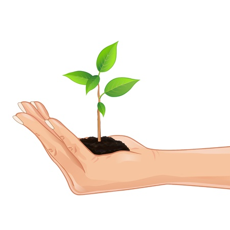 hand holding plant: Hand holding a fresh green plant, element eco design, isolated on white background  Vector illustration